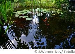 Braunes Wasser im Teich